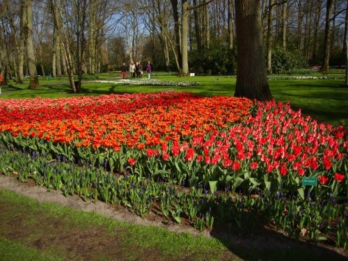 I giardini di Keukenhoff, Olanda