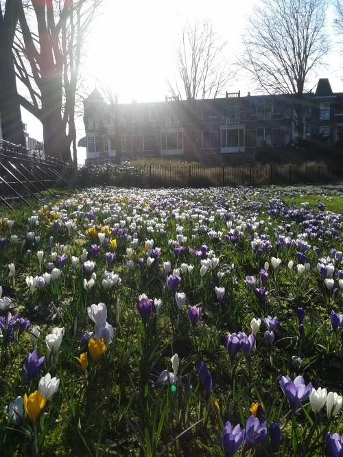 Den Haag in fiore