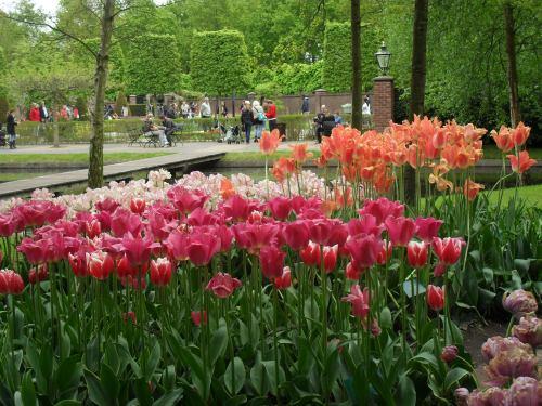 Olanda in fiore