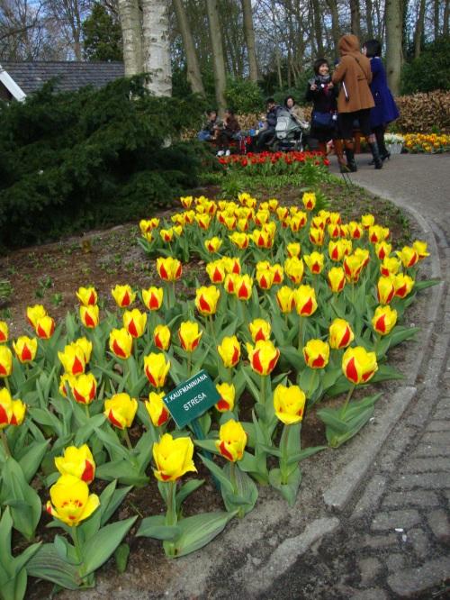 fiori in Olanda
