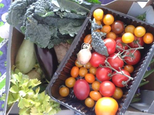 Organic box Den Haag in Transitie